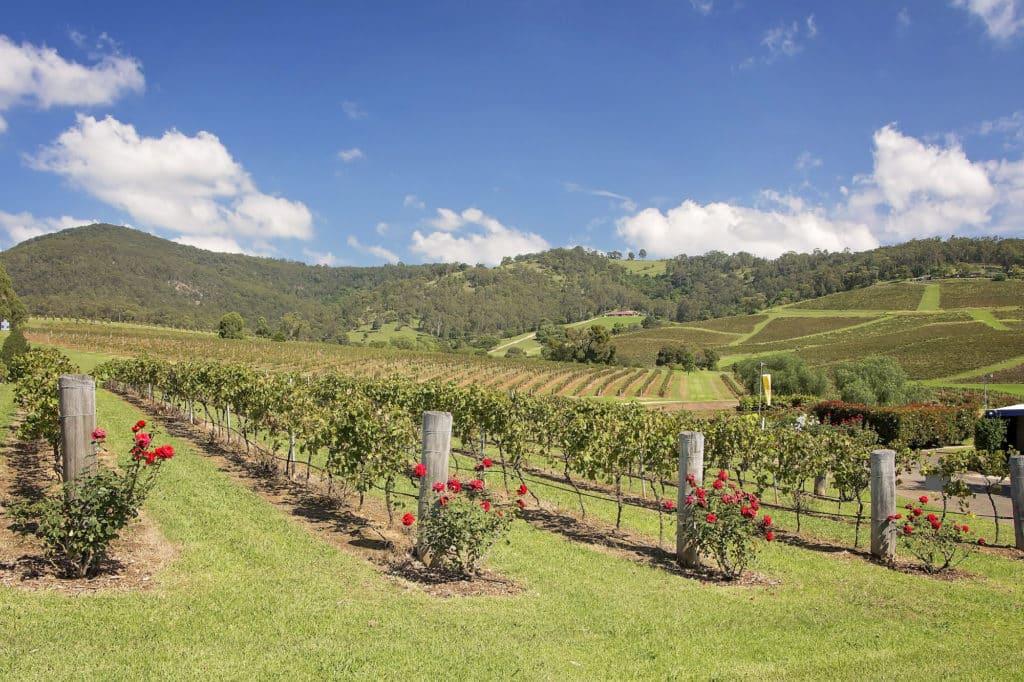 vineyard verge safety barriers